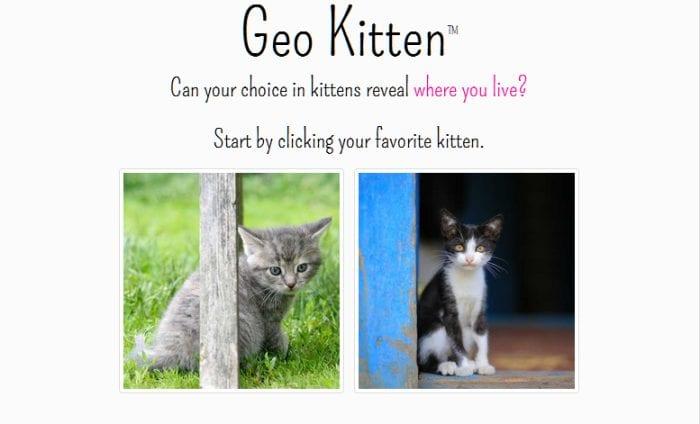 geo kitten