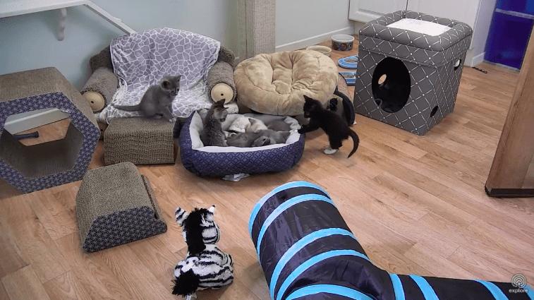 live kitten cam