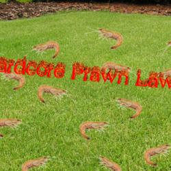 Hardcore Prawn Lawn