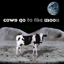 Why Cows Moo
