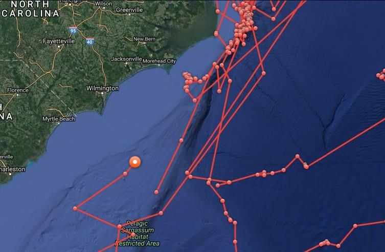 shark tracking