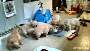 cute puppy live web cam