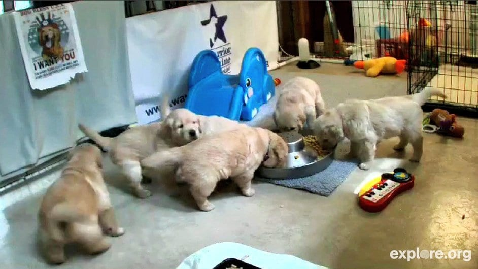 cute puppy live web cam