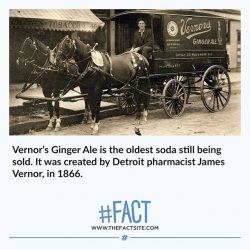 Fun Fact Site