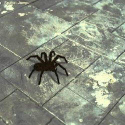 Huge Scary Spider