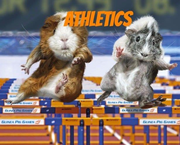 funny guinea pig stuff