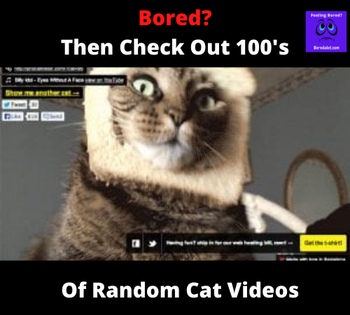 Random Cat Videos