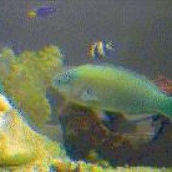 Live Fish Tank Camera