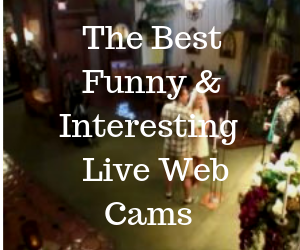 The Best Funny & Interesting Live Web Cams