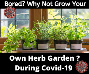 Fighting Boredom_ A Guide to Growing Indoor Herbs During COVID-19